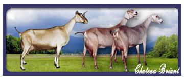 goatsframe